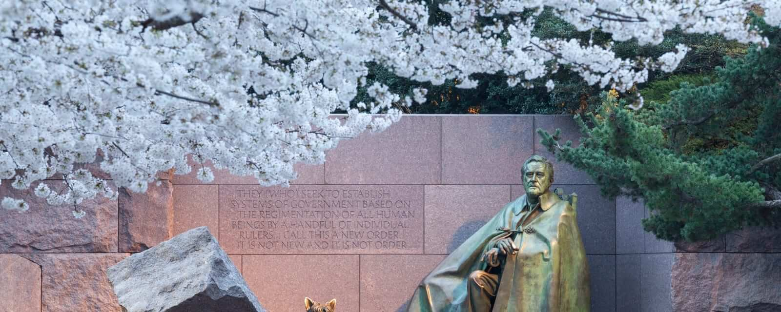 Early Japanese cherry blossoms surround the floodlit monument to Franklin Delano Roosevelt in DC