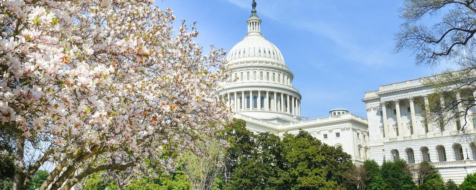 The,Capitol,In,Spring,Season,-,Washington,Dc,,United,States